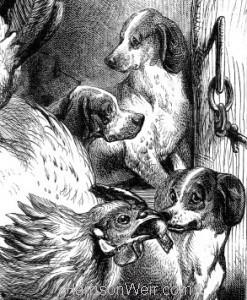 Detail: Hen feeding Pups by Harrison Weir