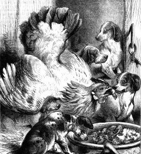 1873 Hen Feeding Pups by Harrison Weir