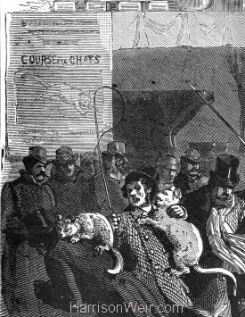 Detail: Course des Chats 1875