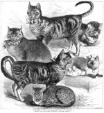 1875 (Oct) Crystal Palace Cat Show Prize Cats