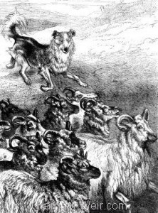 1876 Collet Dog Herding by Harrison Weir