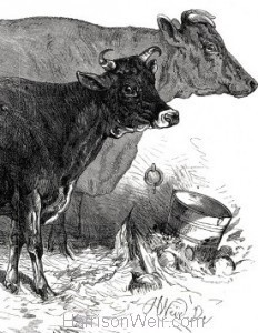 Detail: 1876 prize Cows at The Dairy Show by Harrison Weir