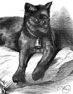 Detail: 1876 Old Tom, beloved pet of Sir James Emerson Tennant, by Harrison Weir