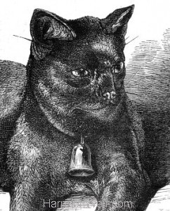 Old Tom, beloved Pet of Sir James Emerson Tennant, by Harrison Weir