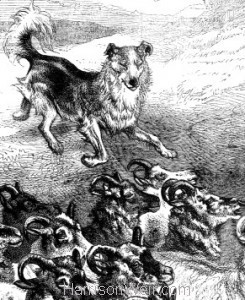 Detail: 1876 Colley Dog Herding by Harrison Weir