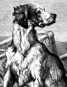 Detail: 1876 The Faithful Watcher by Harrison Weir