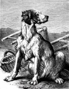 1876 The Faithful Watcher by Harrison Weir