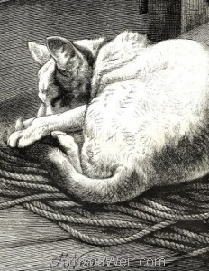 Detail: 1877 Puss On A Voyage by Harrison Weir