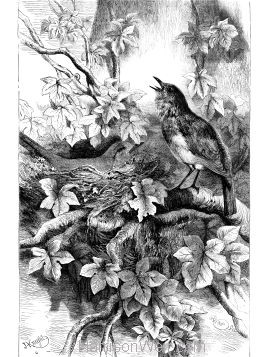 1877 Appeal for a Protected Bird by Harrison Weir