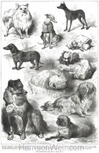1877 The Birmingham Dog Show, Prize Dogs by Harrison Weir