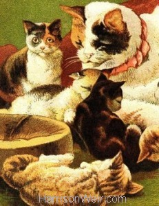 Detail: 1877 Cat and Kittens by Harrison Weir