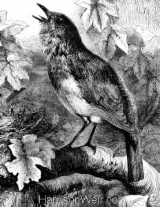 Detail 2: 1877 Appeal for a Protected Bird, by Harrison Weir