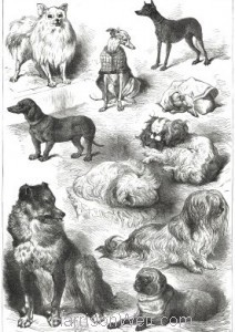 1877 Prize Dogs: Birmingham Dog Show by Harrison Weir