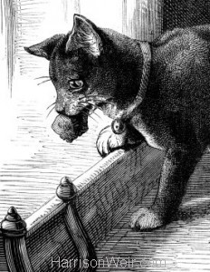 Detail: 1877 A Clever Cat by Harrison Weir