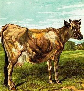 1877 The Cow by Harrison Weir