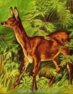 1877 The Deer by Harrison Weir