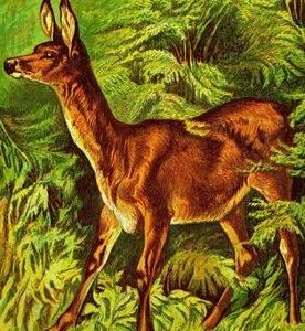 1877 The Deer by Harrison Weir