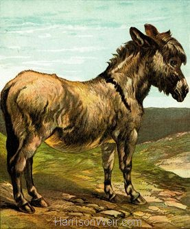 1877 The Donkey by Harrison Weir