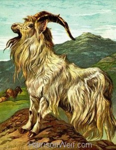 1877 The Goat by Harrison Weir