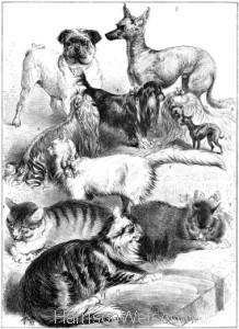 1878 (Aug) Crystal Palace Cat and Pet Dog Show