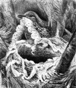 1878 A Bird's Nest, by Harrison Weir