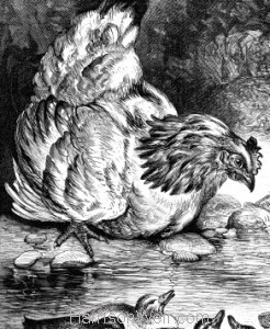 Detail: The Hen and her Ducklings by Harrison Weir