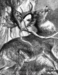 1878 The Stag in trouble by Harrison Weir