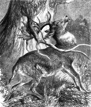 1878 The Stag in trouble, by Harrison Weir