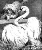 1878 Fight between a Dog and a Swan, by Harrison Weir