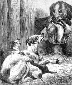 1878 A Dog's Pity by Harrison Weir
