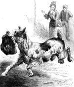 1878 A Dog Highway Robber, by Harrison Weir