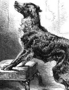 Detail: A Dog's Instinct, by Harrison Weir