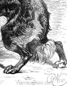 Detail: A Dog's Instinct, signature of Harrison Weir