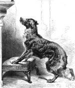 1878 A Dog's Instinct by Harrison Weir