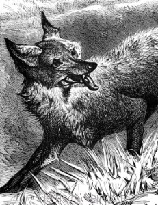 Detail: A Fox in the Furrow, by Harrison Weir