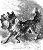 1878 A Sagacious Dog, by Harrison Weir