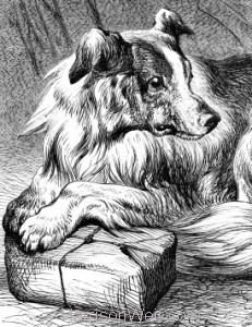 Detail: A Sagacious Dog, by Harrison Weir