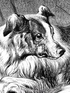 Detail: A Sagacious Dog by Harrison Weir