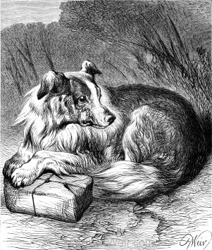 1878 A Sagacious Dog by Harrison Weir