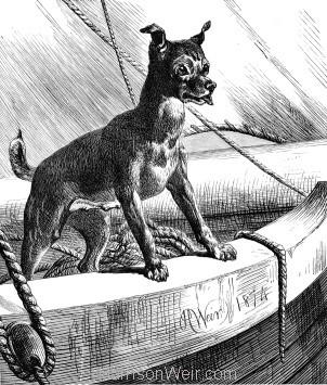 1874 A Sea-Faring Dog by Harrison Weir