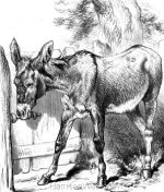 1878 A Sociable Donkey by Harrison Weir