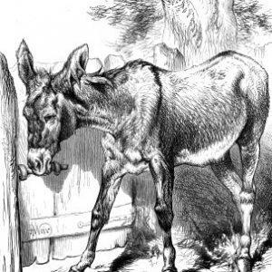 1878 A Sociable Donkey by Harrison Weir