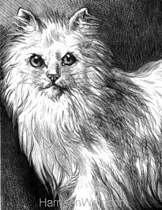 Detail: 1878 Angora Cat by Harrison Weir