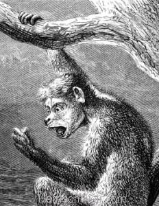 Detail: Ape in a Tree, by Harrison Weir