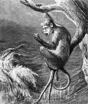 1878 Ape in a Tree, by Harrison Weir