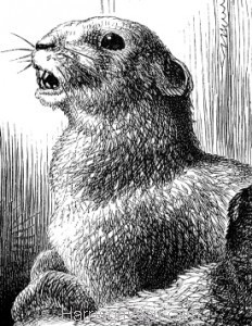 Detail: Beavers, by Harrison Weir