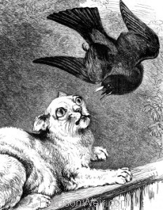 Detail: Blackbird and Cat, by Harrison Weir