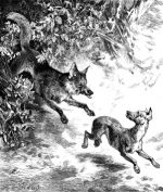 1878 Boldness of a Vixen Fox, by Harrison Weir