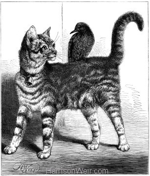 1878 Cat and Starling, by Harrison Weir