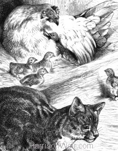 Detail: Cat minding Chickens, by Harrison Weir